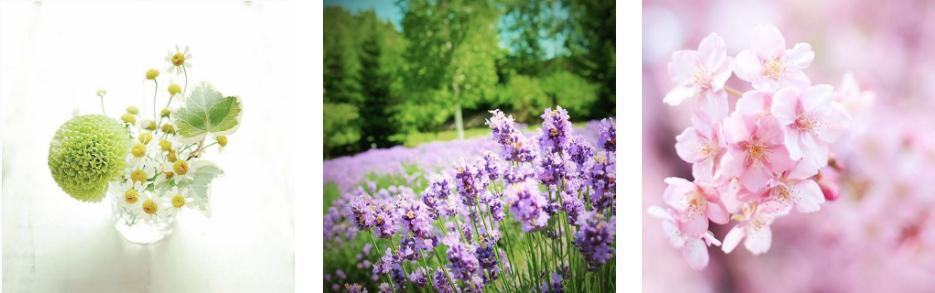 花の写真―椎名トモミ
